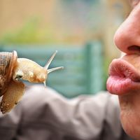 Un puñado de motivos para pasarte a la dieta de los insectos
