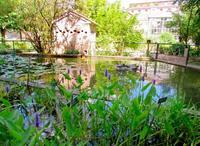 Un paseo por el Jardín botánico de Ferrara