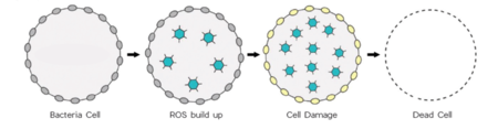 Bacteria Cell Pic A803047a 3892 4fc3 8112 3e6b98544318