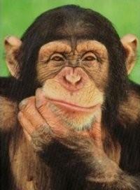 Los chimpances y la moral humana