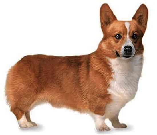 Los perros son capaces de entender hasta 200 palabras