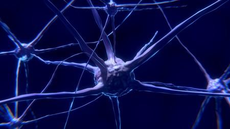 La Neurociencia Entra En Su Siguiente Nivel Llega El Neurocapitalismo 2
