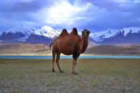 10 Imágenes para conocer el Lago Karakul
