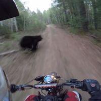 Vas paseando por el campo y se te cruza un oso