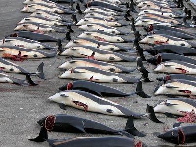 ¿El mejor modo de salvar a las ballenas? Contaminándolas