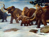 En Stanford buscan el renacer del mamut jugando con su ADN y el del elefante asiático