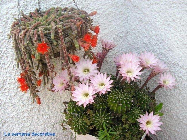 flores del badulake de ana en la semana decorativa