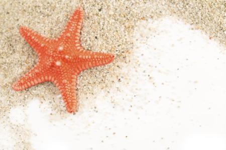 ¿El calentamiento global está haciendo enfermar la vida marina?