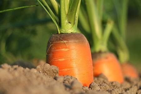 Beneficios De La Zanahoria Para Tu Salud Como Lograr Bronceado Espectacular