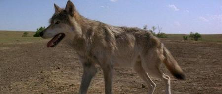 960_danes_with_wolves_blu-ray7x.jpg