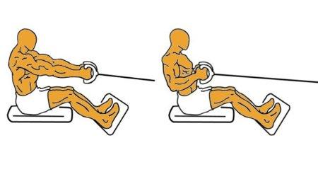 Guía para principiantes (XXXVII): Remo en polea baja