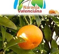 Naranjas y clementinas con fecha de recolección y de consumo preferente