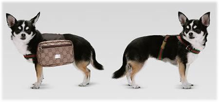 Bolso Gucci para perros