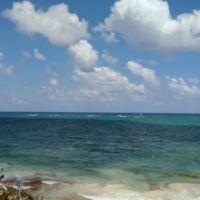 Así es como las algas están acabando con algunas de las hermosas playas del Caribe