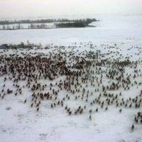 Brote de ántrax en Siberia debido al deshielo del calentamiento global