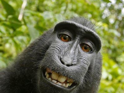 PETA pierde el juicio contra David Slater en el caso del selfie de la macaco Naruto