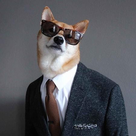 En El Nuevo Ano Chino Dedicado Al Perro Recordamos Los Mejores Looks De Nuestro Favorito Mensweardog 01