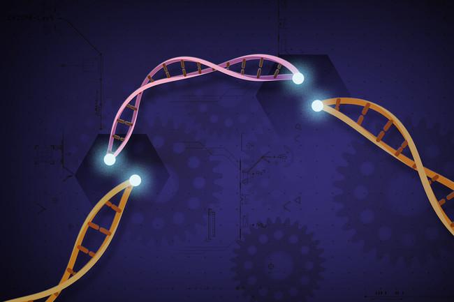 CRISPR se topa con un nuevo problema: dos estudios asocian la herramienta de edición genética con mayor riesgo de cáncer