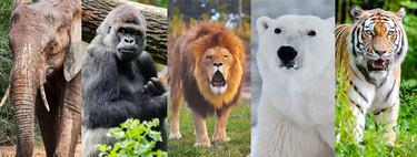 """Elefante, gorila, león, oso polar y tigre son los 'New Big 5' que hay que """"cazar"""" con una cámara de fotos (en vez de con escopeta)"""