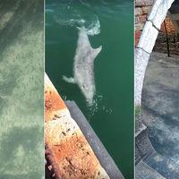 Canales limpios, delfines en los puertos. El impacto del coronavirus en el aire y las aguas de Italia