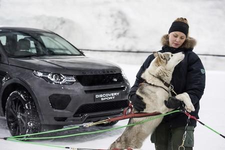 Land Rover Discovery Vs Trineo De Perros 3