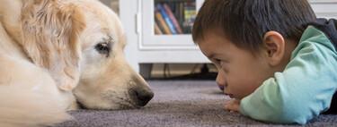 Martín de tres años tiene autismo: necesita un perro de asistencia que le ayude a comunicarse y a ser más autónomo