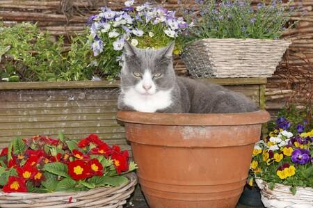 Plantas para tener con mascotas
