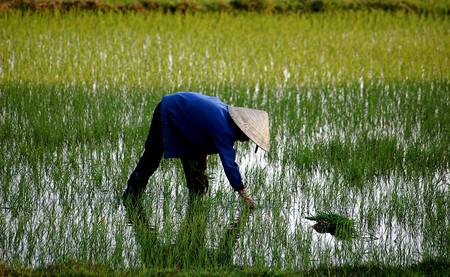 El cambio climático está provocando que más de 24.000 personas al año emigren en Vietnam