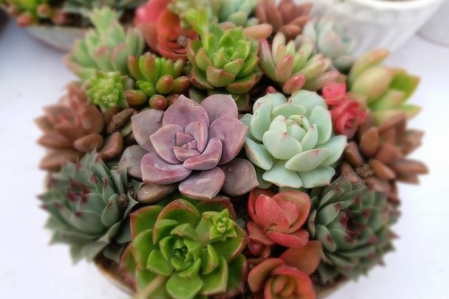 ¿Se te mueren las plantas en casa? 9 plantas todoterreno que lo resisten casi todo