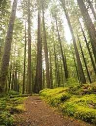 ¿Cuántos árboles cuesta tu viaje?