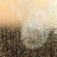 Pronto tendremos lectores de huellas para móviles LCD que reconocerán nuestro dedo en cualquier parte de la pantalla