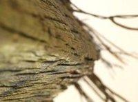 La madera hace más fuerte al plástico