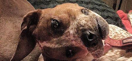 Que no te engañe tu cerebro: este no es el perro más feo del mundo