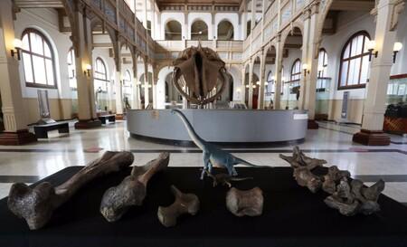 Dinosaurio Chile