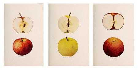 Ilustracion Manzanas Antiguas