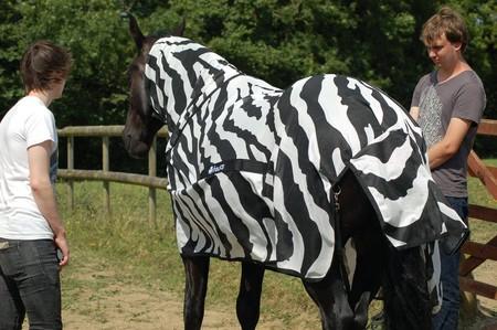 Zebras Dos