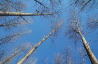 Mirar árboles alarga 5 años la vida