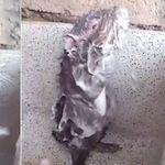 Sentimos romper la magia, pero la ratita que se ducha probablemente no esté nada contenta