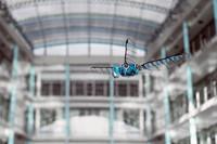 [Vídeo] BioniCopter, la libélula robótica de Festo