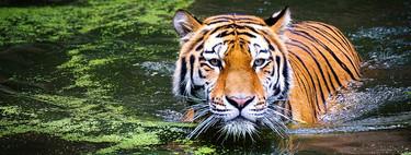 No hemos acabado con el 60% de la vida salvaje del planeta, pero hay motivos de sobra para alarmarse