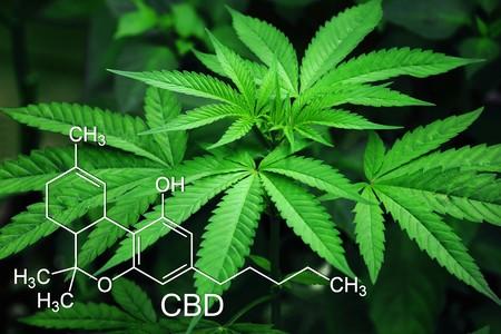 Y Tras La Burbuja De Lo Cripto Ahora Llega La Burbuja Del Cannabis 2