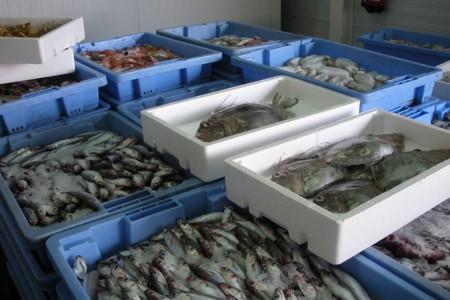 Pescado5