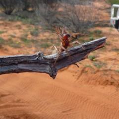 Foto 2 de 22 de la galería colores-del-gran-desierto-de-victoria en Xataka Ciencia
