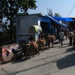 Foto 9 de 11 de la galería vamino-de-la-india-de-haridwar-a-rishikech en Diario del Viajero