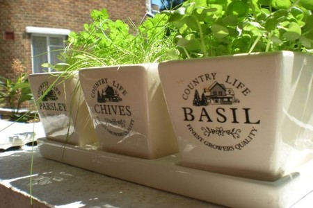 Cómo cultivar hierbas aromáticas para tus ensaladas en casa