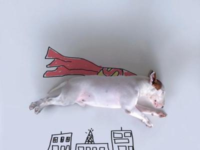 Los cómicos retratos de Jimmy Choo, un Bull Terrier muy simpático