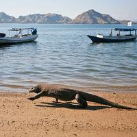 """""""No habrá derechos humanos aquí; sólo derechos animales"""": la isla de Komodo cierra a los turistas"""