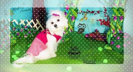 Siuí Closet, moda para los perros más cool
