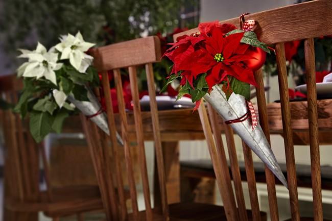 2015 Poinsettia Comedor Clasico 01 Es