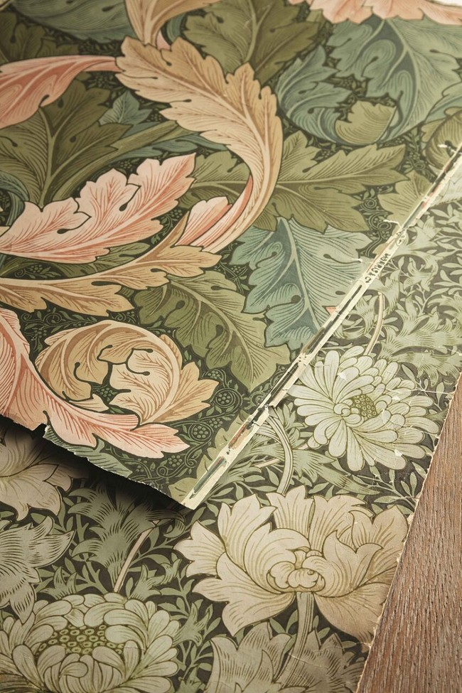 Acanthus And Chrysanthemum Archive Shot Preview